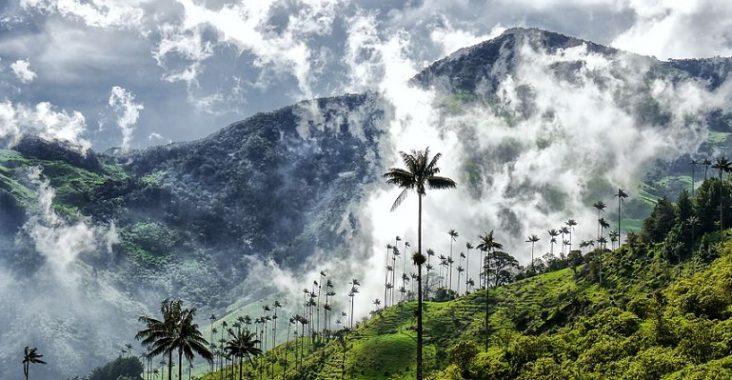 trek dans la vallée de Cocora